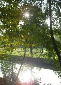 Ufer am Bach