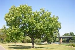 Bäume - Baummagie