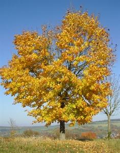 Baum im Herbstzauber
