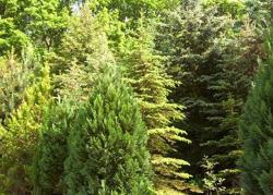 der Wald als Kraftquelle